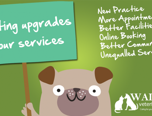 Exciting upgrades to our services