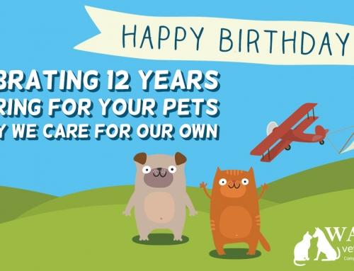 Celebrating 12 Years!