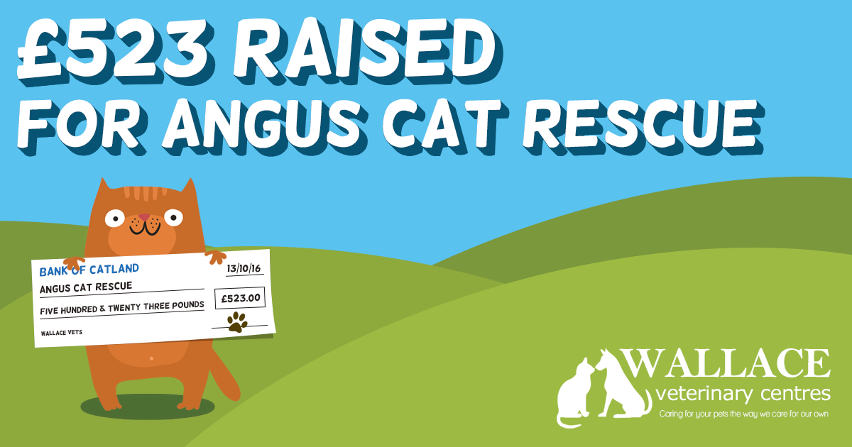 Charity Quiz Night for Angus Cat Rescue
