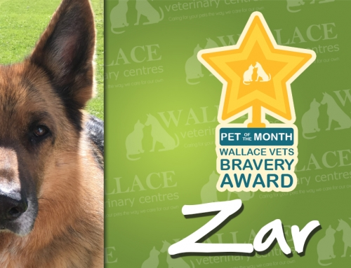 Bravery Award, Pet of the Month!