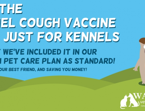 Why the Kennel Cough vaccine isn't just for Kennels