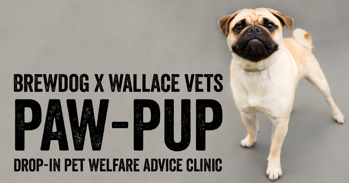 Paw-Pup Vet Clinic at BrewDog Dundee