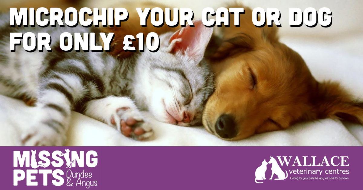 Microchip your Cat or Dog for only £10