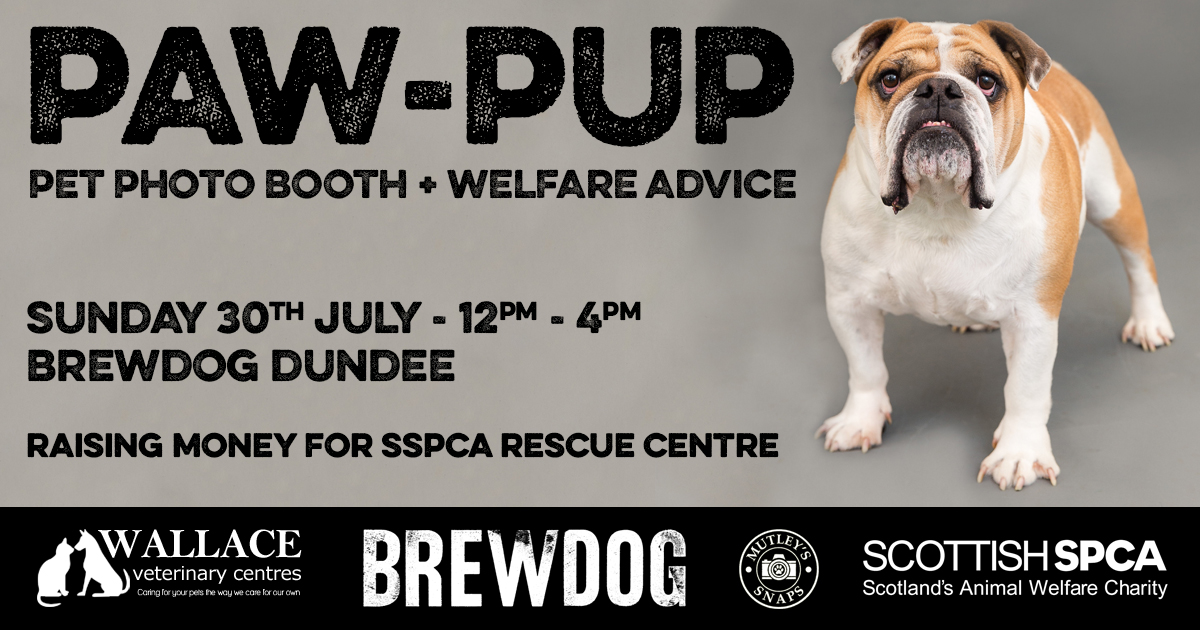 Paw-Pup @ BrewDog Dundee