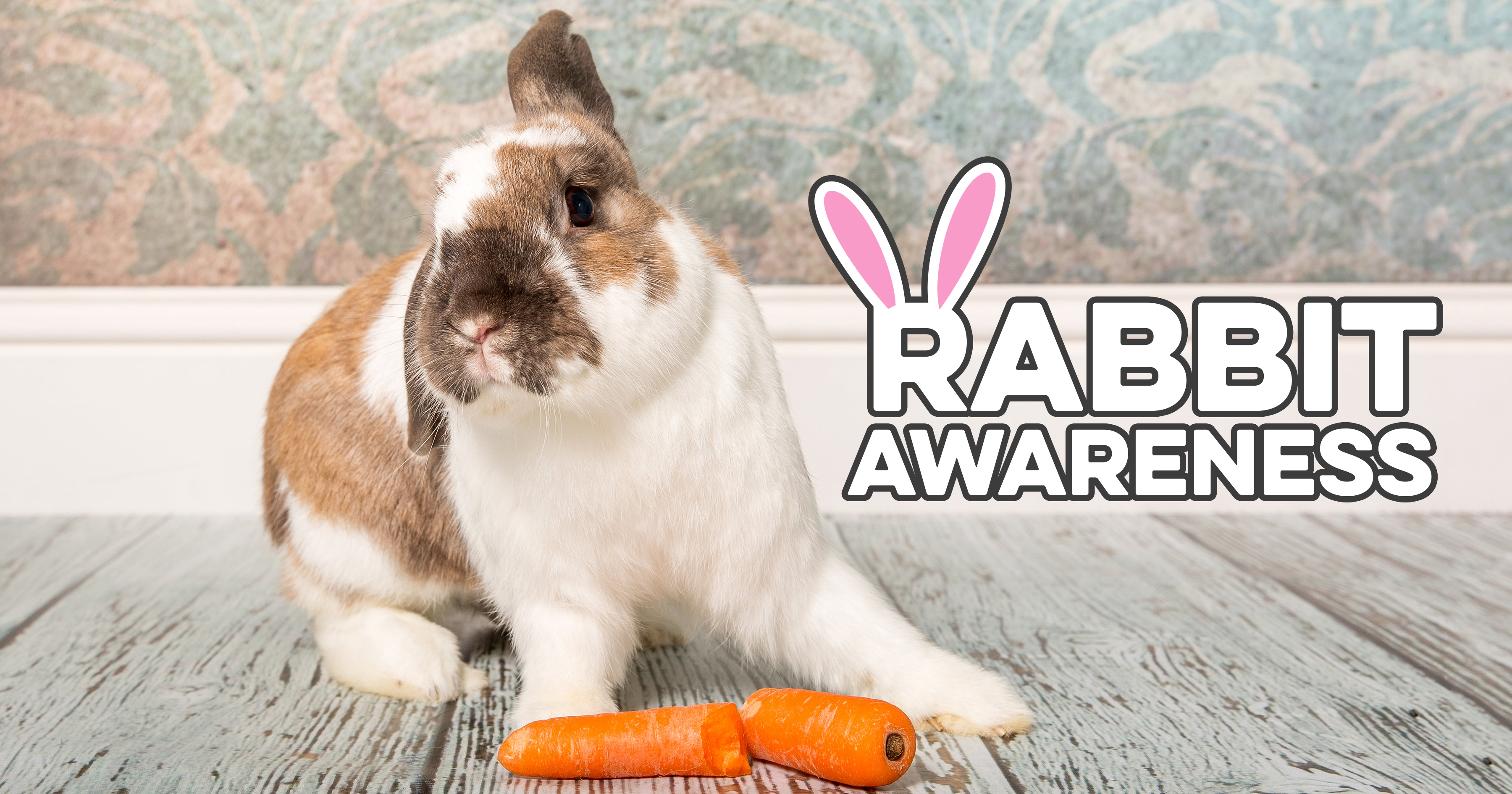 Rabbit Awareness