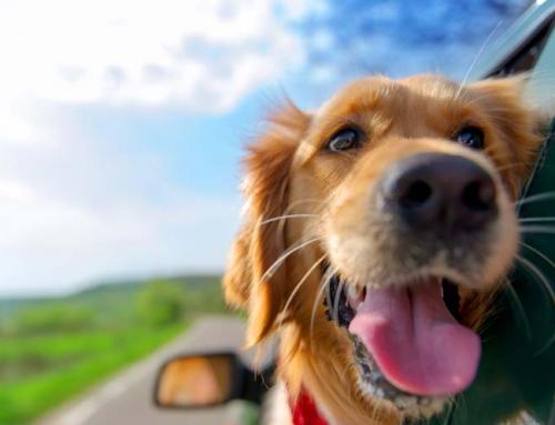 Post Brexit Pet Travel