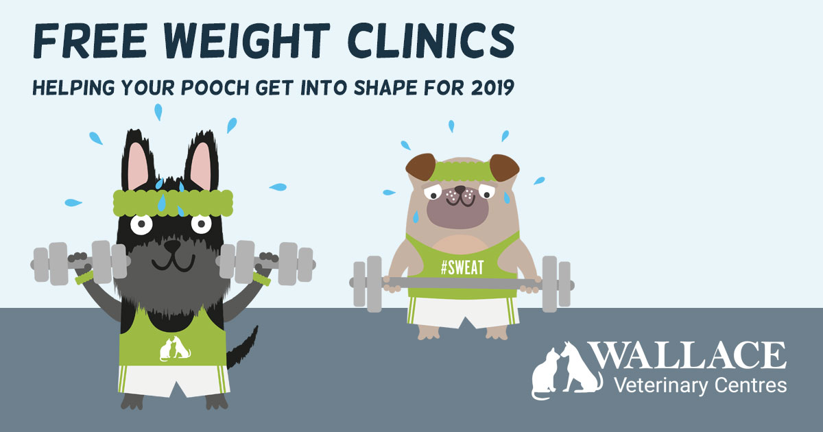 Free Weight Clinics